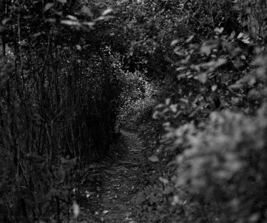 © Lilly Schwartz